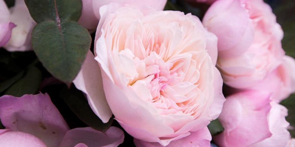 Siero Viso alla Rosa per pelli mature